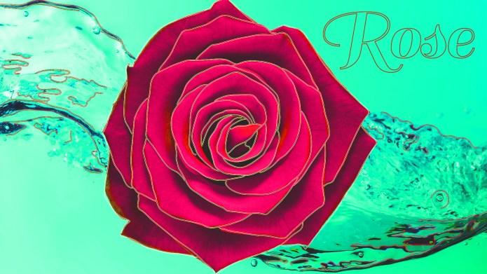 American girl baby names - rose