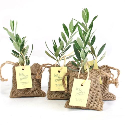Olive Tree Plant Favor