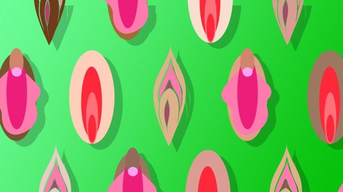 An array of vulvas of different