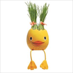 Grass growing eggs | Sheknows.com