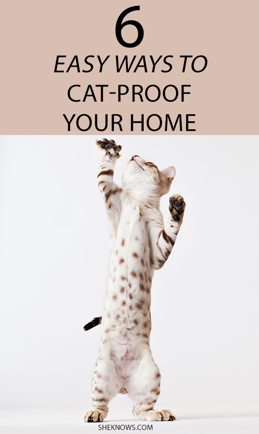 Pin it! Tips for Saving Your Furniture From Cats Claws