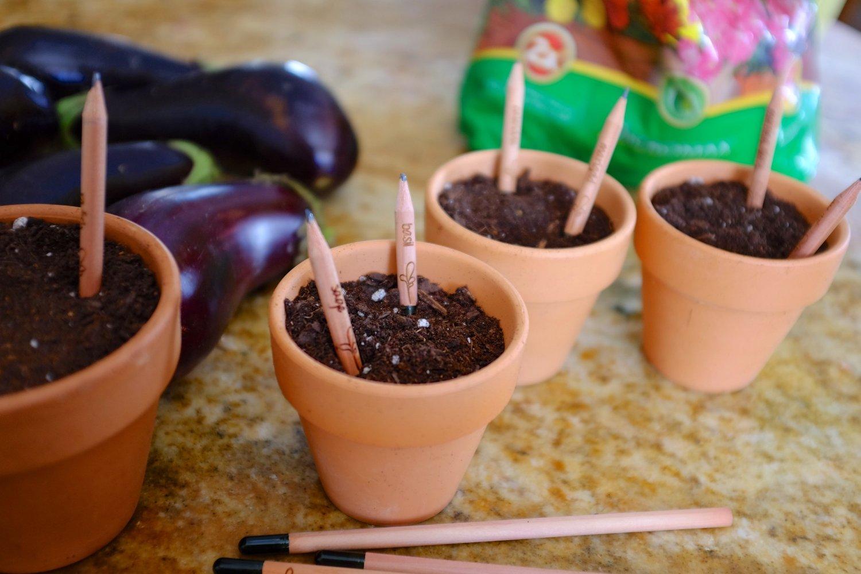 Pencils that turn into plants | Sheknows.com