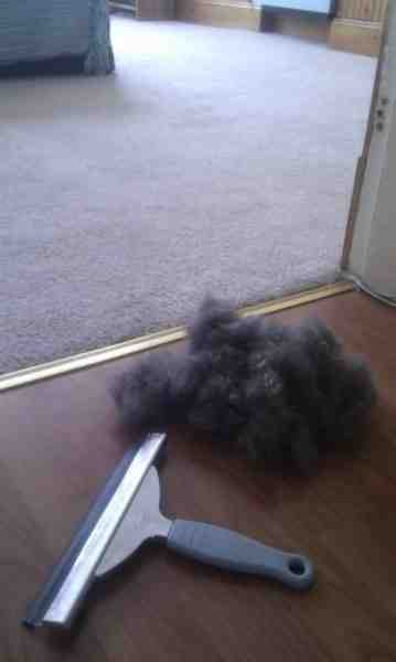 Cleaning hack: Use a squeegee on pet hair