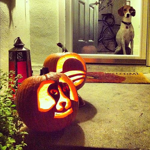 Pups and Pumpkins: 1