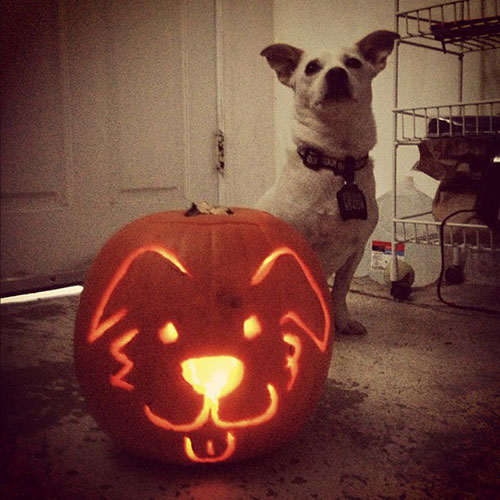 Pups and Pumpkins: 10