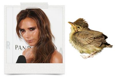 Victoria Beckham loves a good bird poop facial