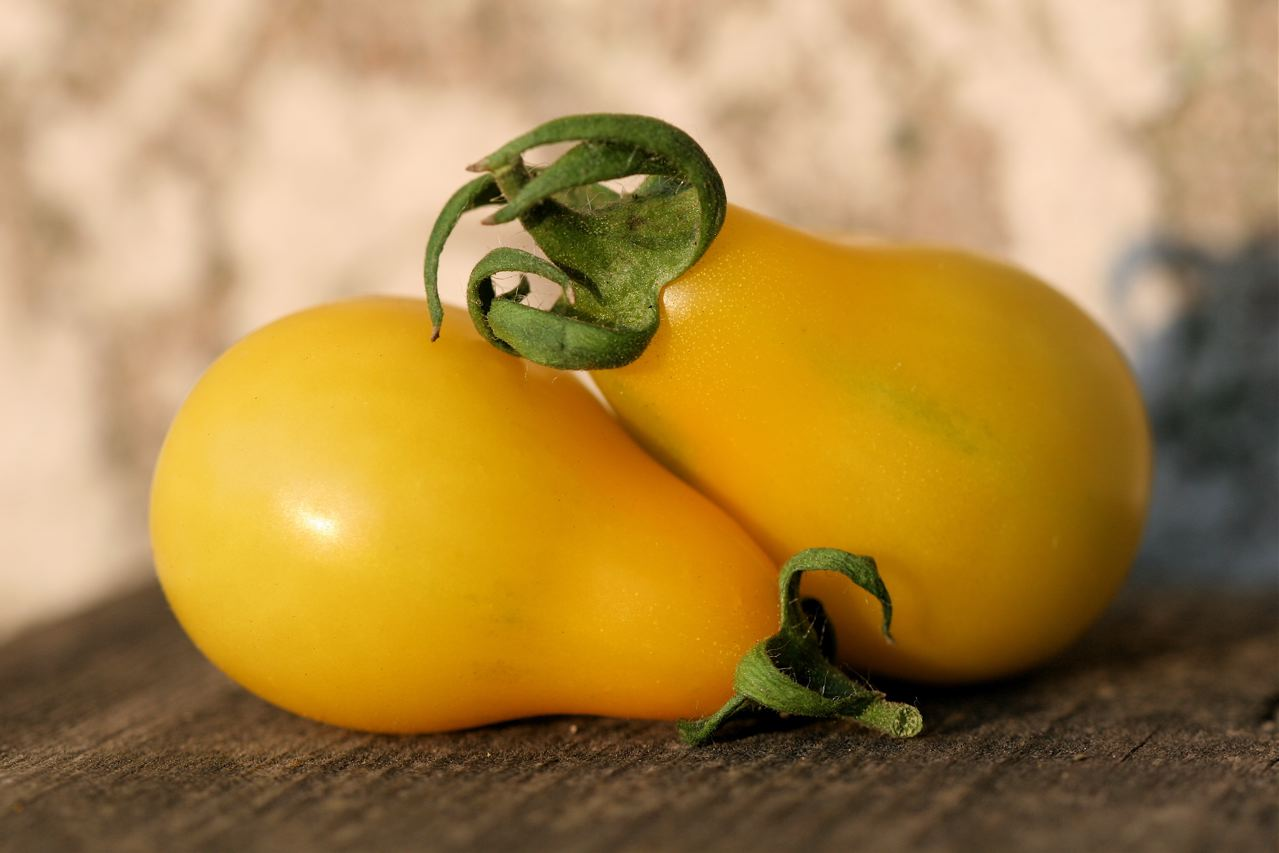 Yellow Pear Tomatoes