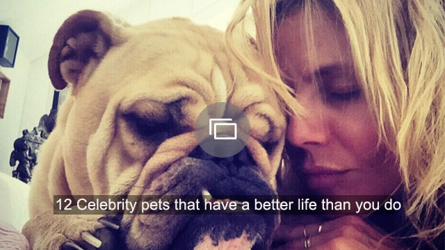 12 Celebrity pets that have a better life than you do