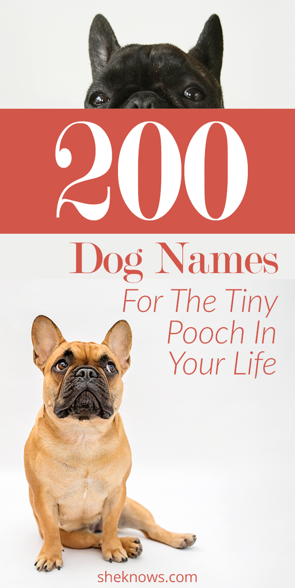 200 Little Dog Names That'll Give Your Mini-Pup Some Serious Swagger