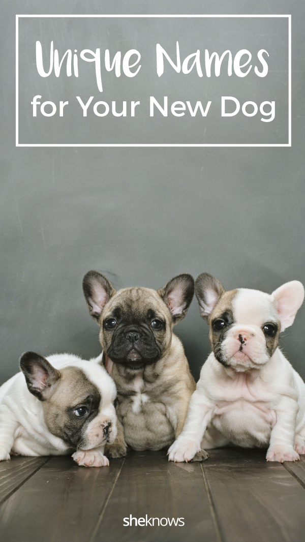 Pin it! Unique Dog Names For Your New Pooch