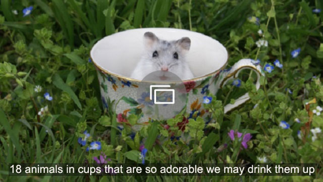 18 animals in cups that are so adorable we may drink them up