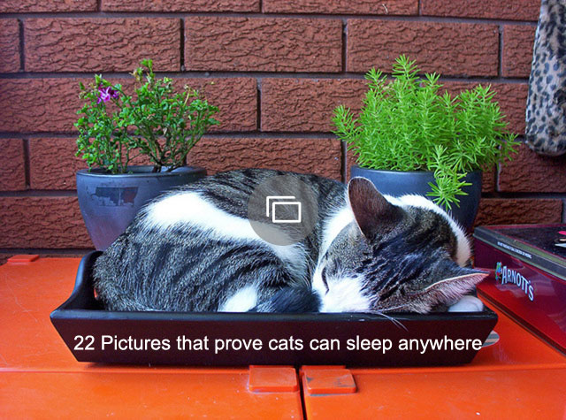 22 Pictures that prove cats can sleep anywhere