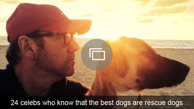 24 celebs who know that the best dogs are rescue dogs