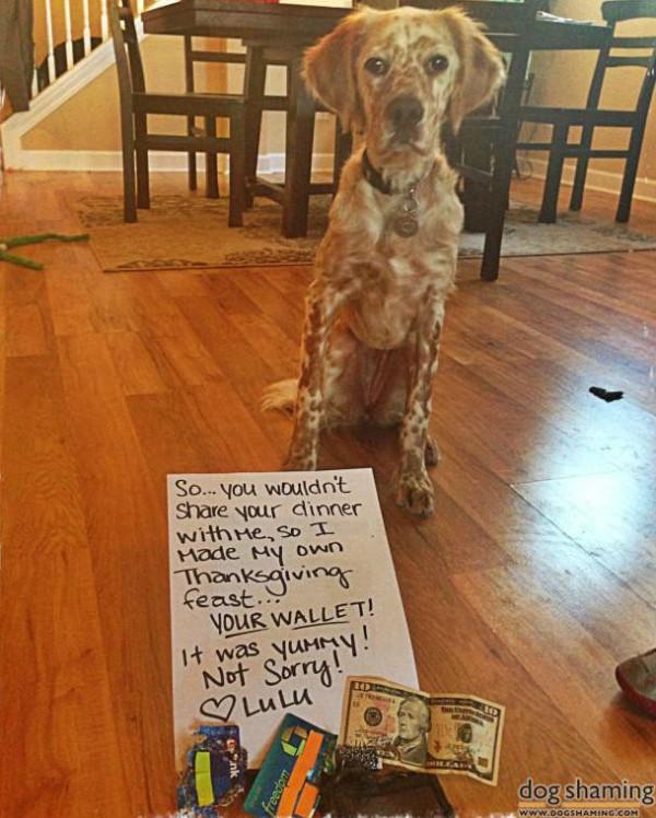 thanksgiving dog shaming