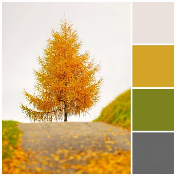 Fall color palette: Fall foliage