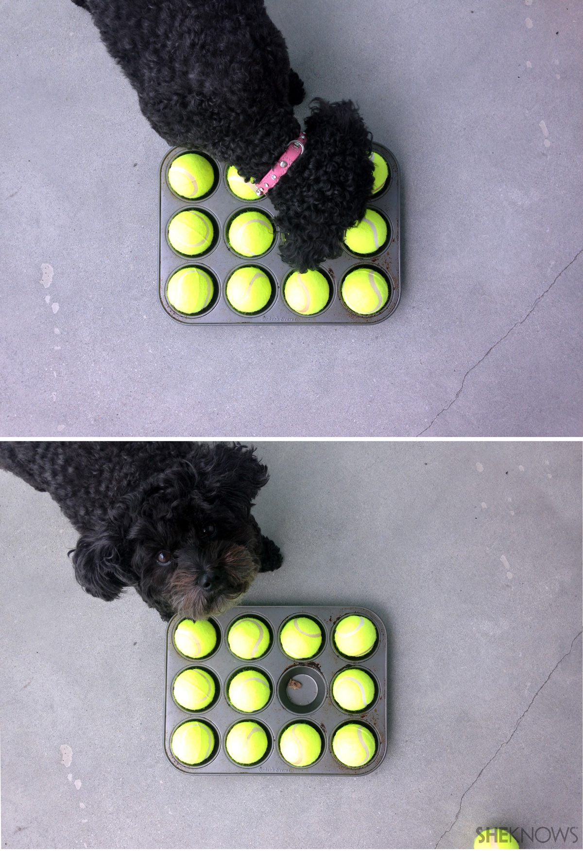 Muffin tin dog game: Step 3: Play time