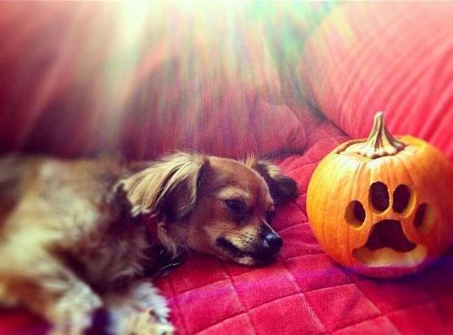 Pups and Pumpkins: 3