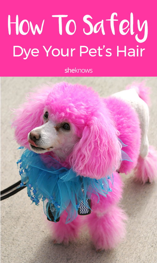 Pin it! How to safely dye your pet's hair