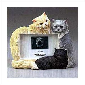 Persian cat picture frame