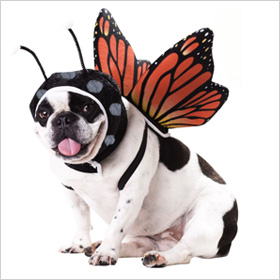 Pet Food Direct Butterfly costume for dogs