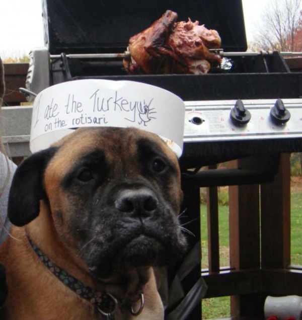 dog ate the turkey