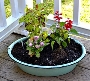 Plant a vintage tub garden