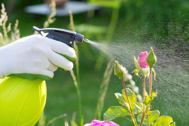 spraying pesticides on flowers