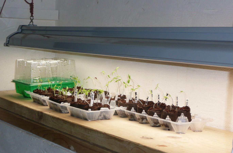 seed starting hacks