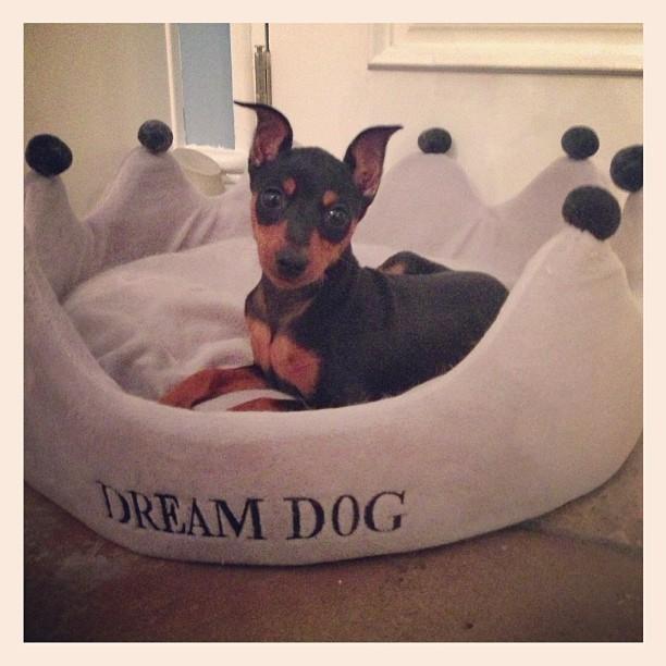 Paris Hilton's dogs