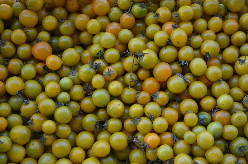 Yellow Nugget Tomatoes