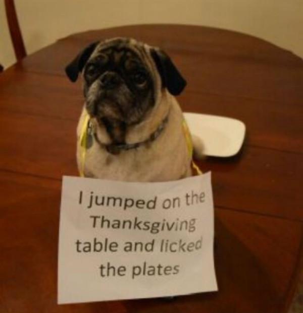 dog shaming thanksgiving