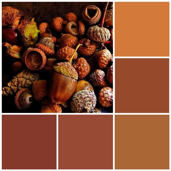 Acorn wonder color scheme