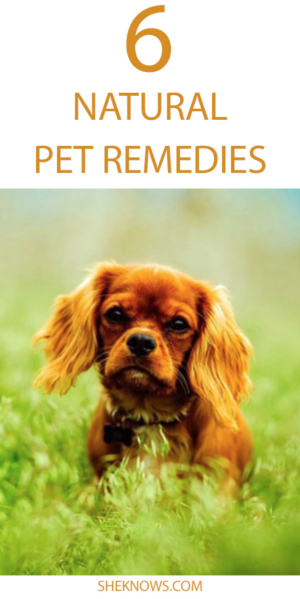 Pin it! Building an all-natural medicine cabinet for your dog or cat