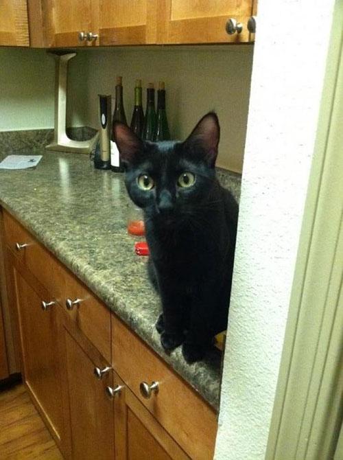 black cat autumn