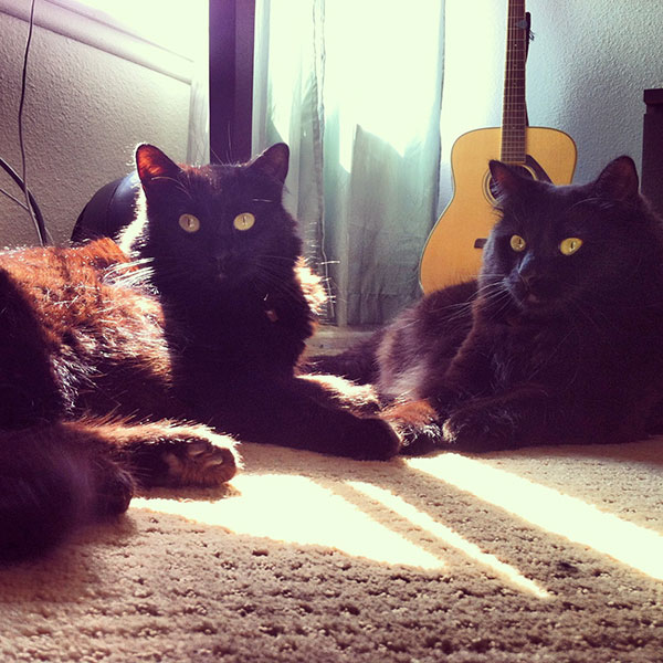 black cat chunk and lucky