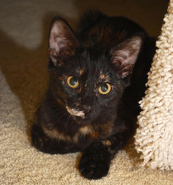 black cat coco