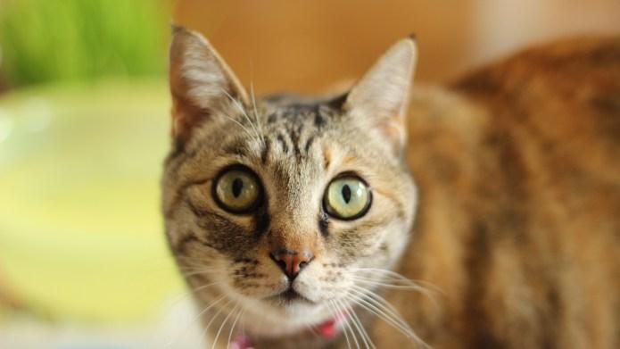 Crazy Cat Lady: I'm allergic to