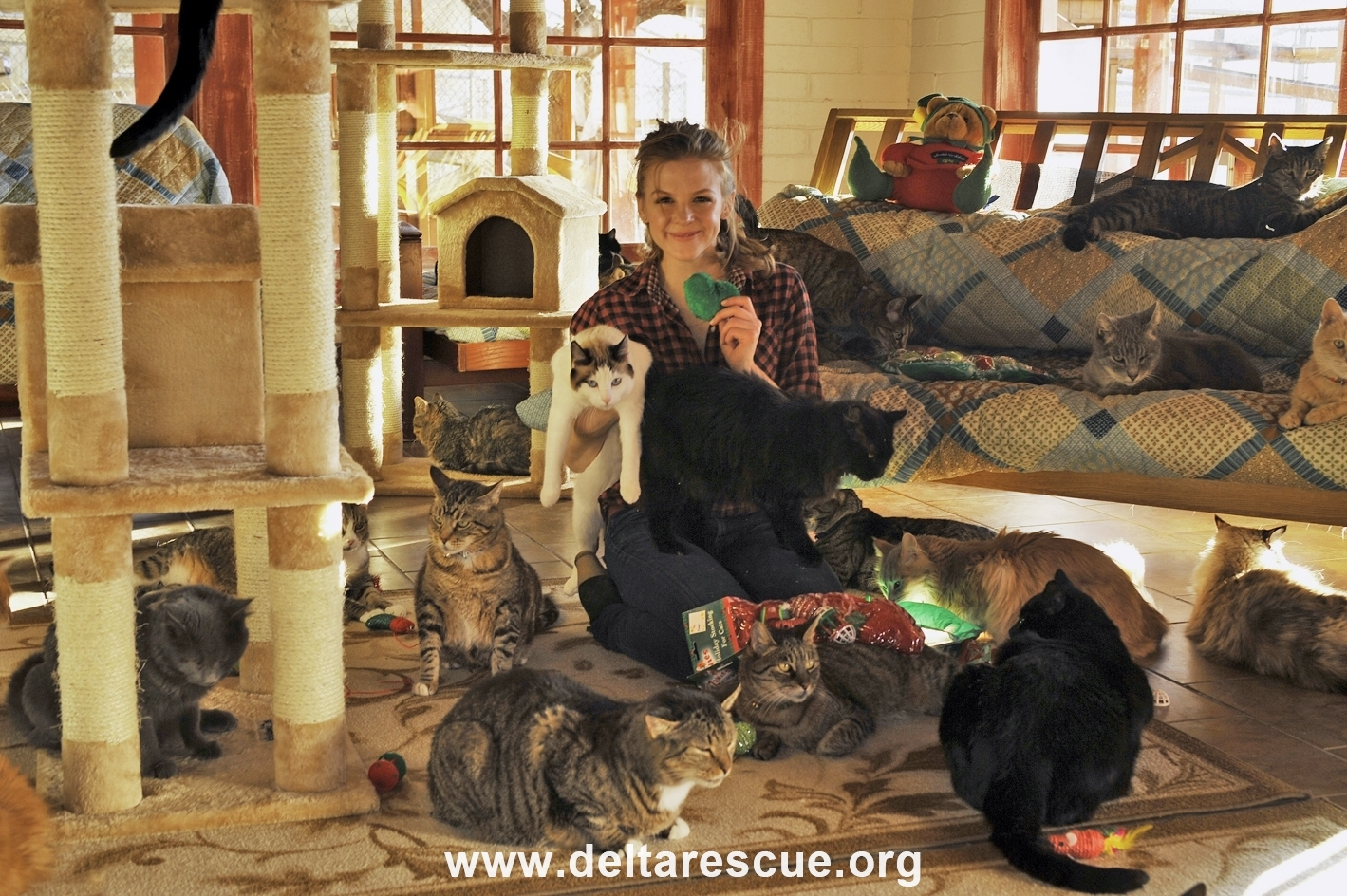 A Delta Rescue Cattery