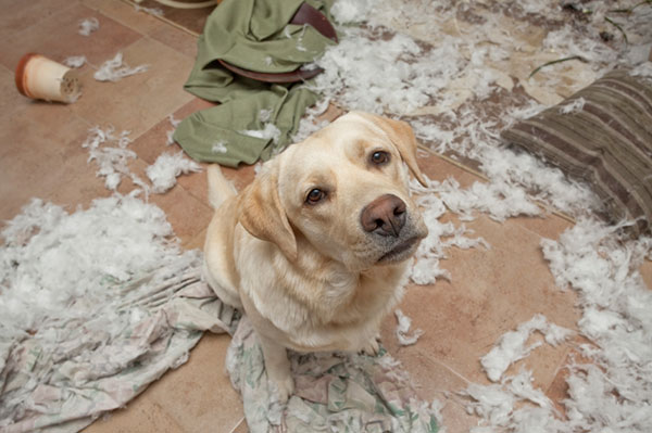 Dog sitting in chewed up mess