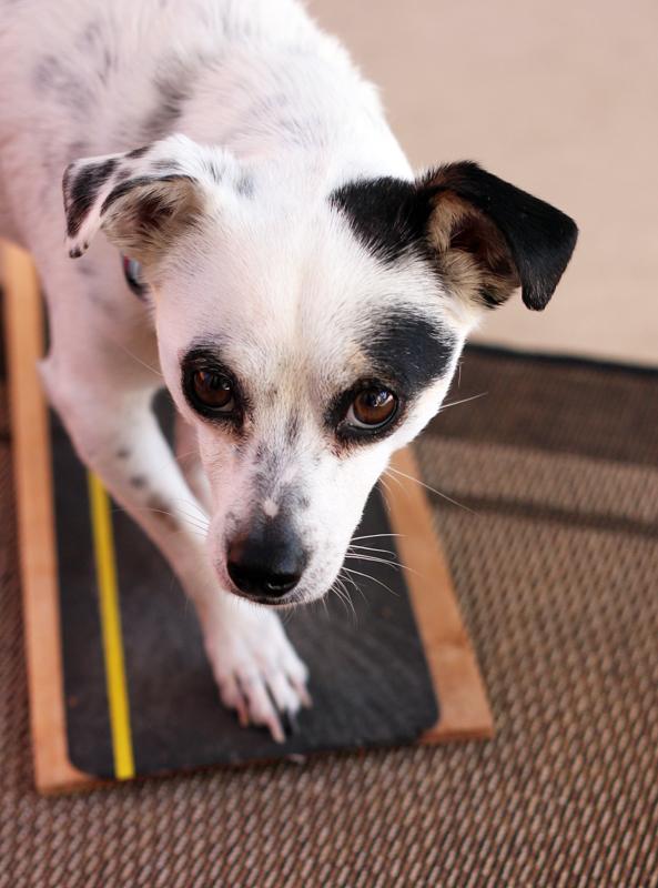Doggie scratching post?