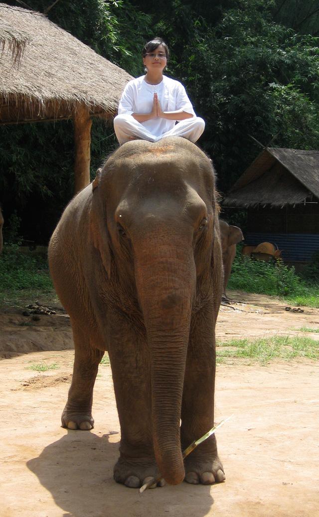 Elephant Yoga in Thailand