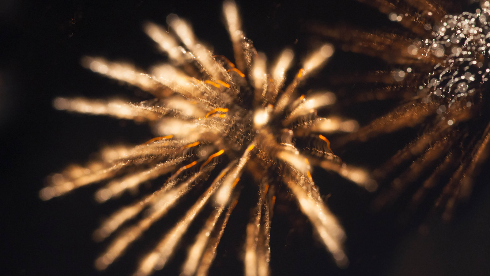 Capturing Fireworks: Long-Exposure Photography