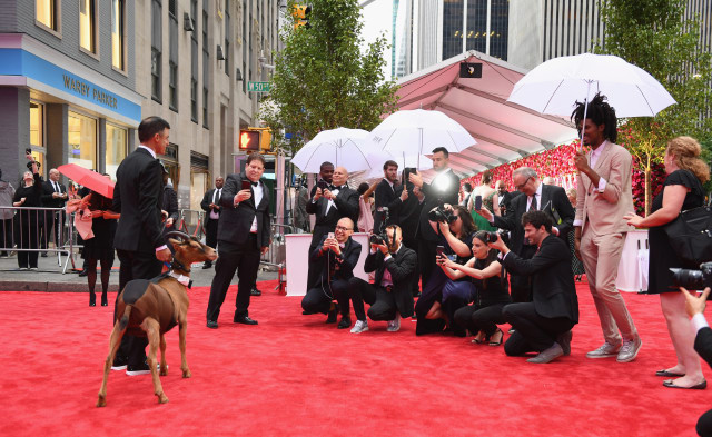 A goat on the Tony Awards red carpet