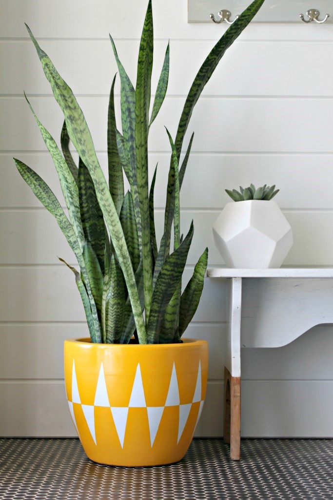 DIY Mother's Day Gifts: Graphic Planter DIY