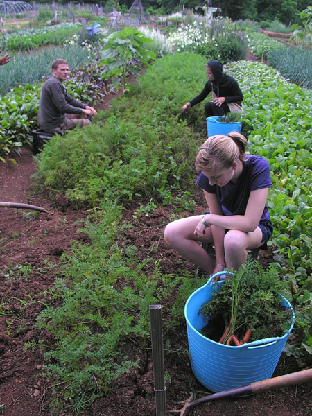 Growing food for the hungry: The Lord's Acre