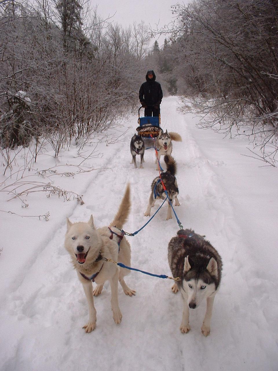 Haliburton dogsledding