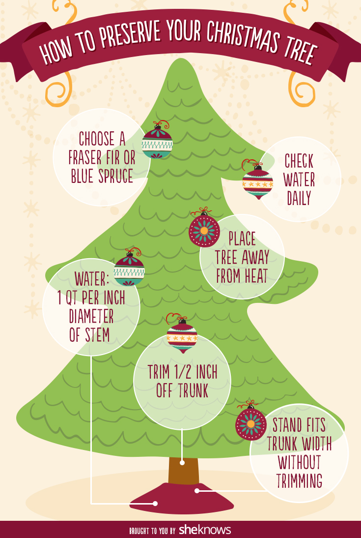 how to preserve your christmas tree