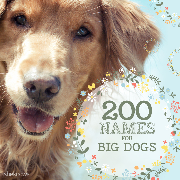 Names for big dogs