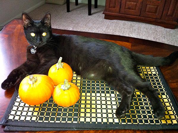 black cat Lily