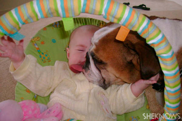 Making your pet a part of the family